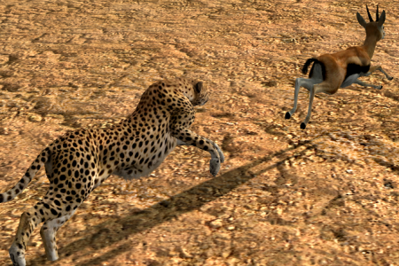 My best shot from the Cheetah Big Game Trophy hunt